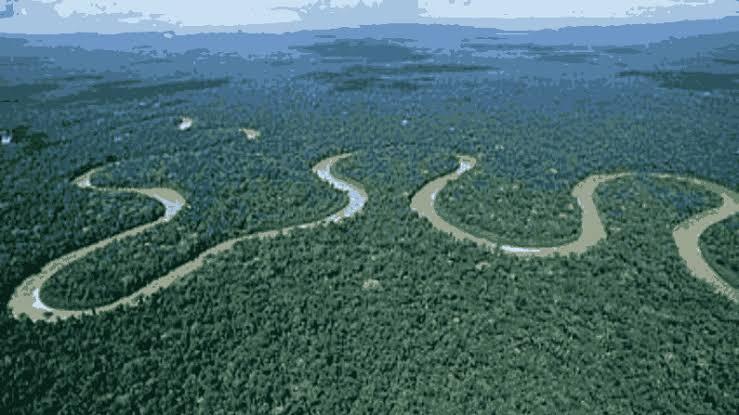 2.अमेजन वर्षावन (दक्षिण अमेरिका)