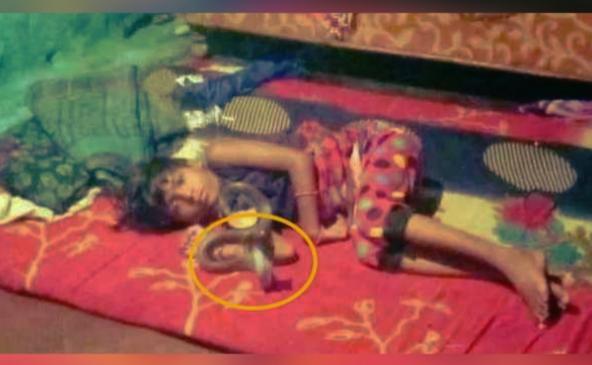 बच्ची के गले में कई घंटे तक लटका रहा कोबरा सांप और फिर डस लिया