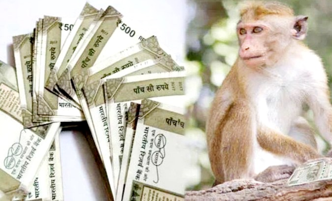 ऑटोरिक्शा ड्राइवर से बंदर ने छीने 1 लाख रुपए और सड़क पर कर दी नोटों की बारिश