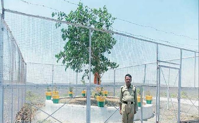 एक ऐसा VVIP पेड़ जिस की सुरक्षा में 24 घंटे तैनात रहते हैं सुरक्षा गार्ड